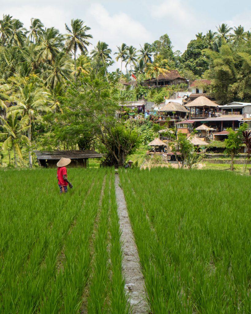 Terrazza di Riso Ubud Bali