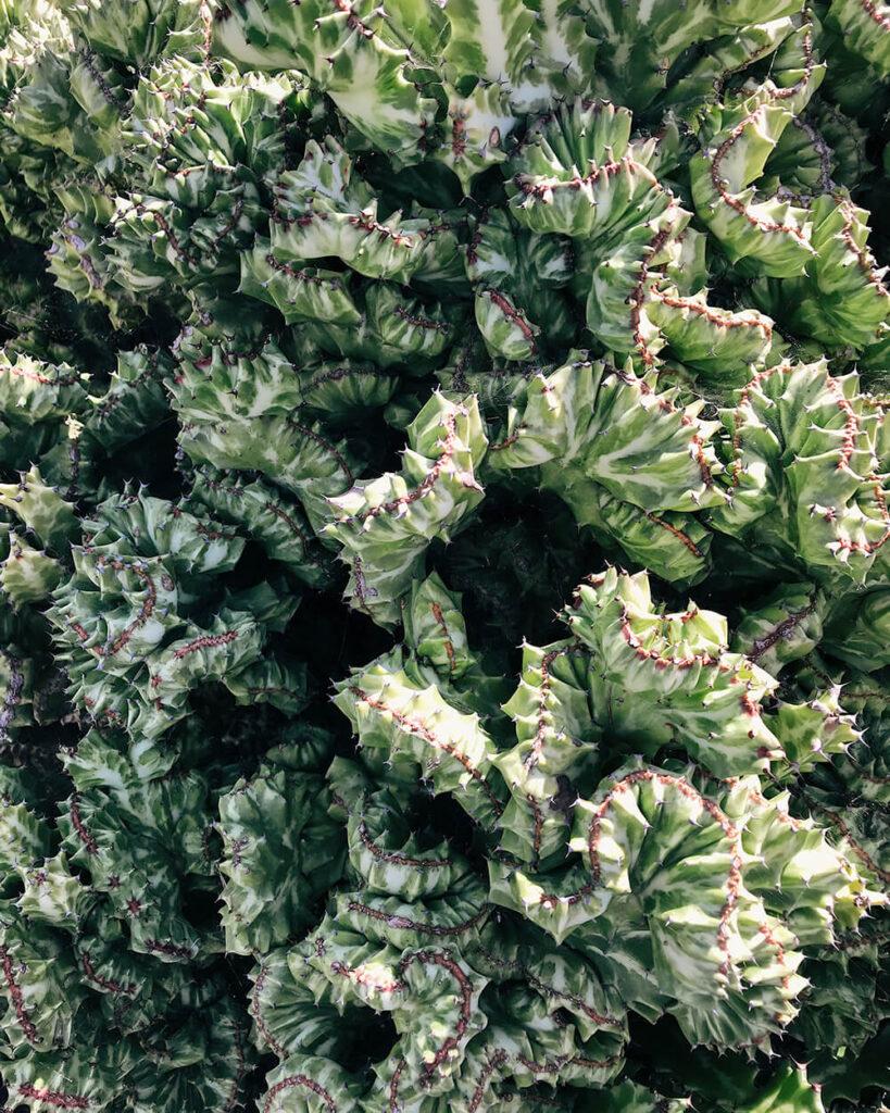 Particolare cactus ai Jardin de Cactus